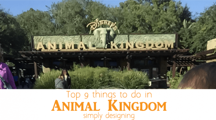 Top 9 things to do in Animal Kingdom - featured image